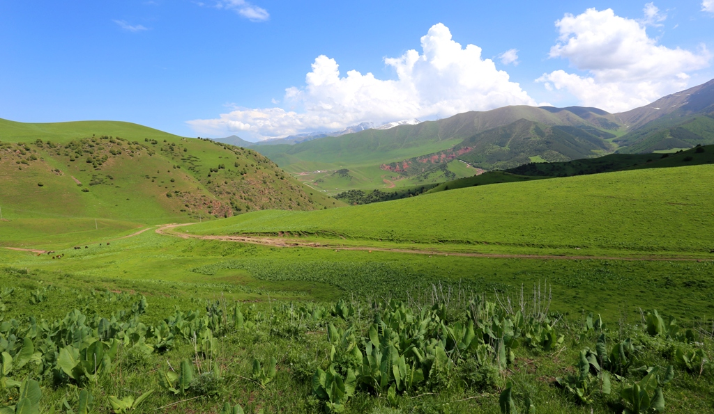 Vicinities of valley Chon-Kurchak.