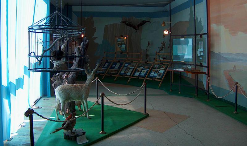 В залах музея Пржевальского.