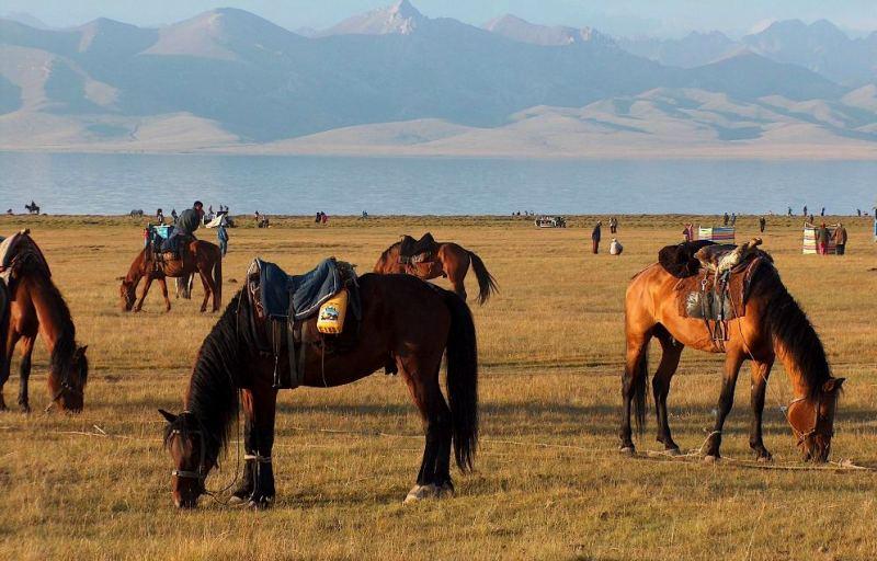 Лошади пастухов на озера Сонг-Куль.