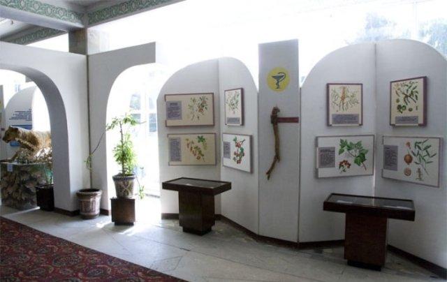 Экспозиция «Лечебные растения Северного Таджикистана».