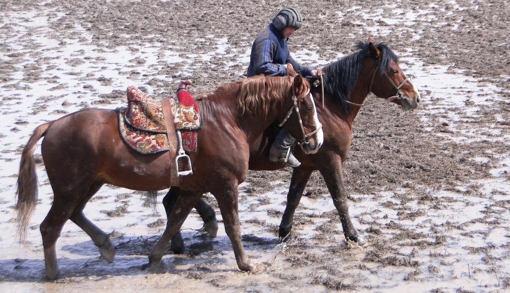 Кто-то уже закончил борьбу за приз и теперь прогуливает основную и запасную лошадь.
