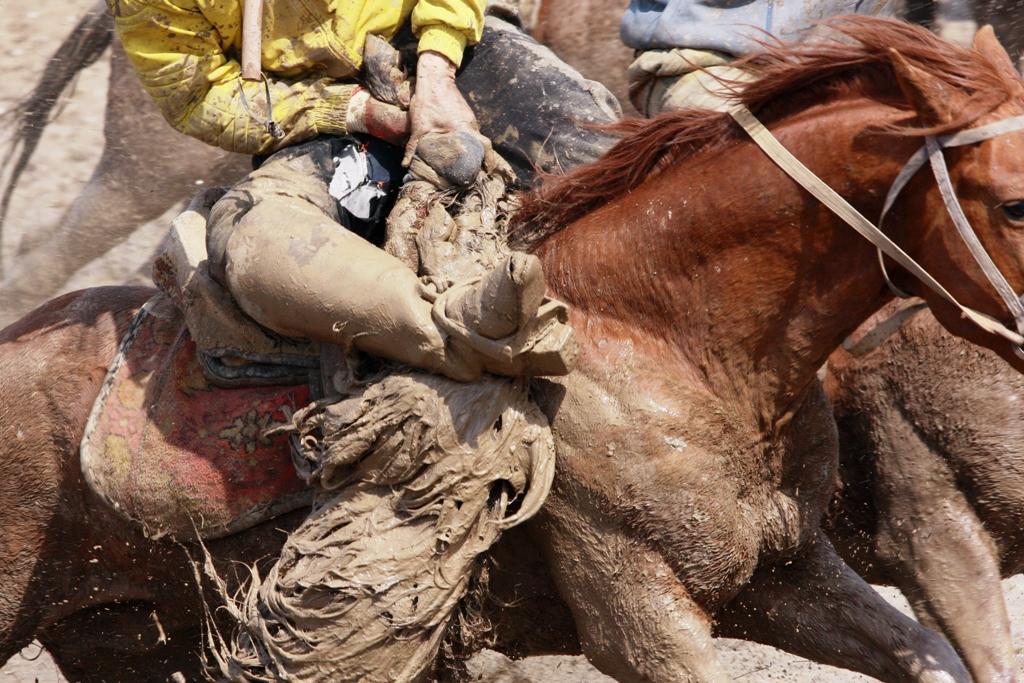 Стоят лошади, как правило, несколько тысяч долларов.