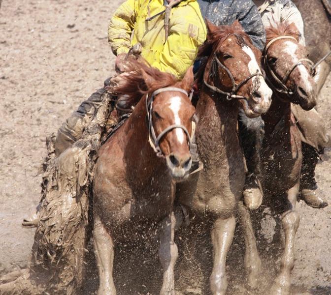 К соревнова¬ниям не допускаются лошади с шиповаными подковами.