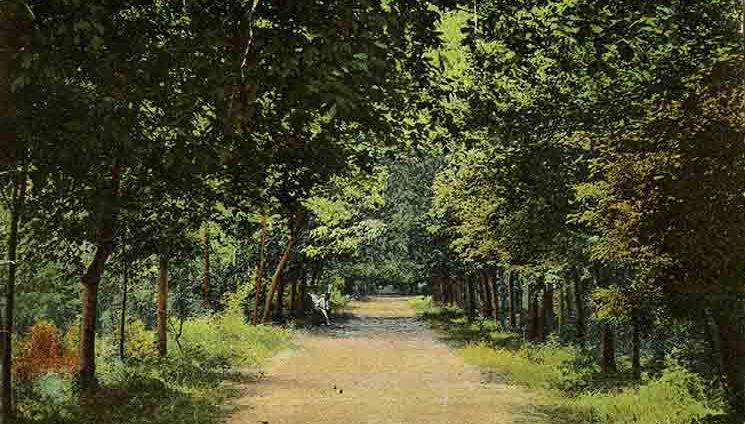 The avenue in the Keshinsky garden. Askhabad, beginning of the last century. Card.
