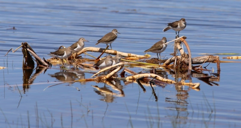 Fauna of the Sarykamysh lake and environs.