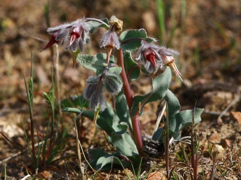 Флора пустыни Кызылкум.